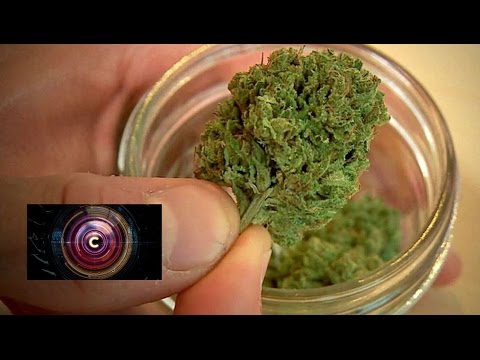 High tech times for medical marijuana in the US - BBC News