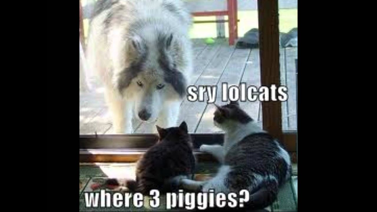 Funny Wolf Pics Youtube