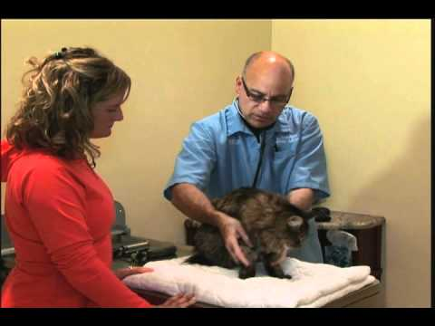 The Importance of a Yearly Physical Exam for your Cat