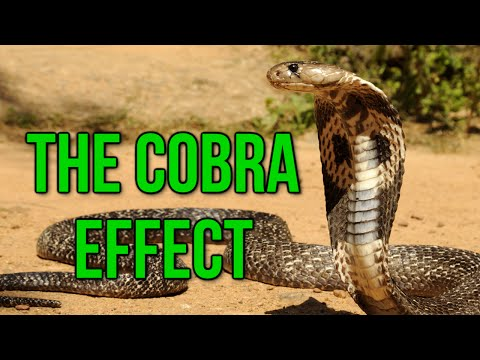 The Cobra Effect (Black Ops 2 Gameplay Commentary)