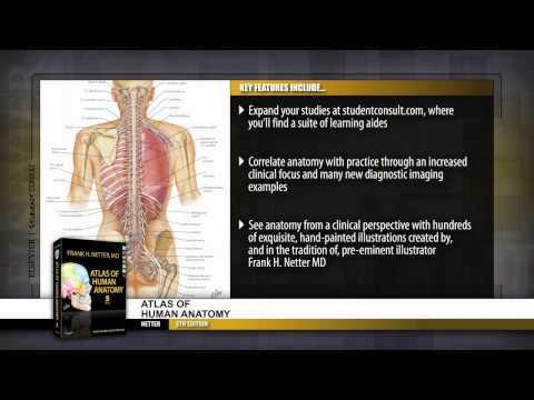 atlas of human anatomy netter 5th edition pdf