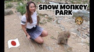 Snow Monkey Park in Japan!! Jigokudani
