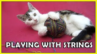 Cute Cats Playing with Strings Compilation 2018 HD   FunnyCat