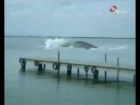 ATAQUE ANGUILA GIGANTE ( giant eel attacks )