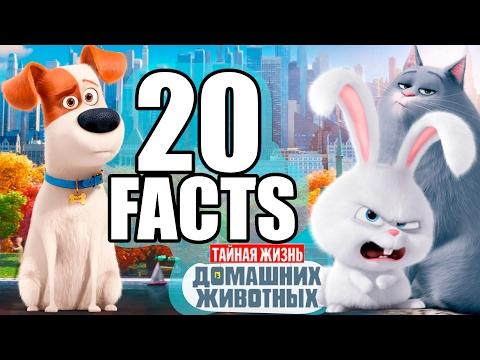 20 фактов о мультфильме Тайная жизнь домашних животных | Movie Mouse