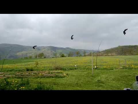 Ha 3 madár egyszerre repül