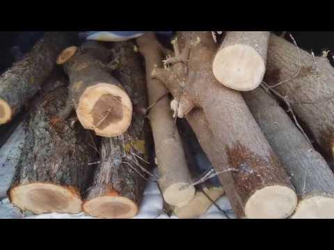 Заготовка древесины. Клен и яблоня.