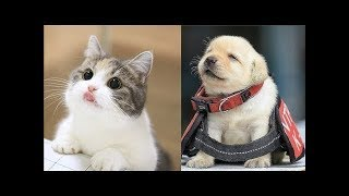 Funny Baby animals Videos Compilation - Cute Animals Video