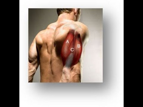 Triceps Workout For Developing The Inner, Outer and Long Heads Image 1