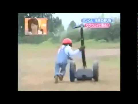 Chimpanzee riding on a segway 10 minutes