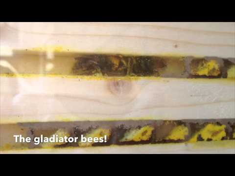 Solitary bee nest box with observation windows by Nurturing Nature