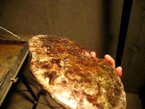 ammonites Video