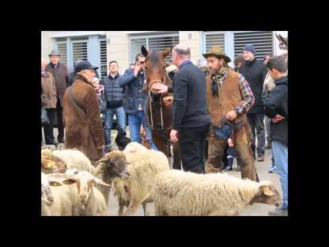 benedizione degli animali 2013 – Bitonto