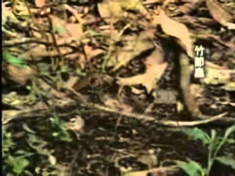 【陽明山國家公園管理處】六足王國-擬態保護
