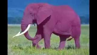 Слоны  Детский хор п/у В.Попова - Розовый слон Монтаж Екатерина Демидова