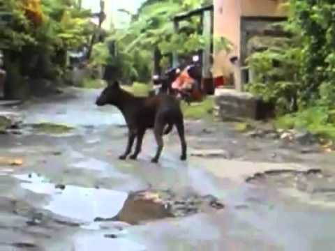 Dog Cruelty in Bali-Indonesia (warning extreme Graphic)