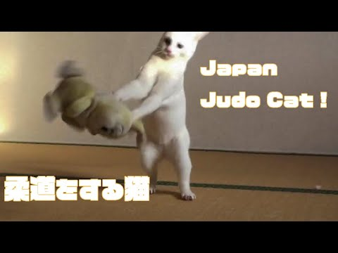 Funny Animal Videos Japanese Judo Cat VS Stuffed Miss Bunny