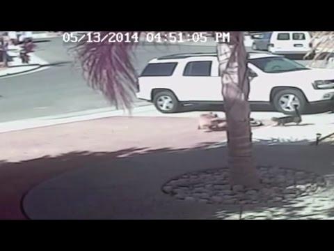 Кот спасает 4-летнего ребёнка от нападения бешеной собаки. Полное видео!
