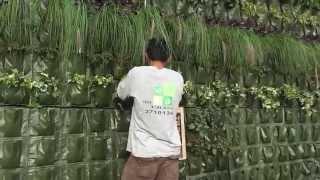 ¿Como hacer un jardin vertical? - Lima Peru