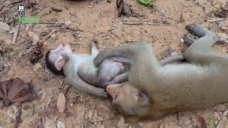 Why big brother monkey angry his little baby monkey ?