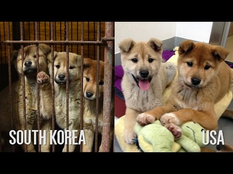 Before/After of the South Korea Dog Meat Dogs