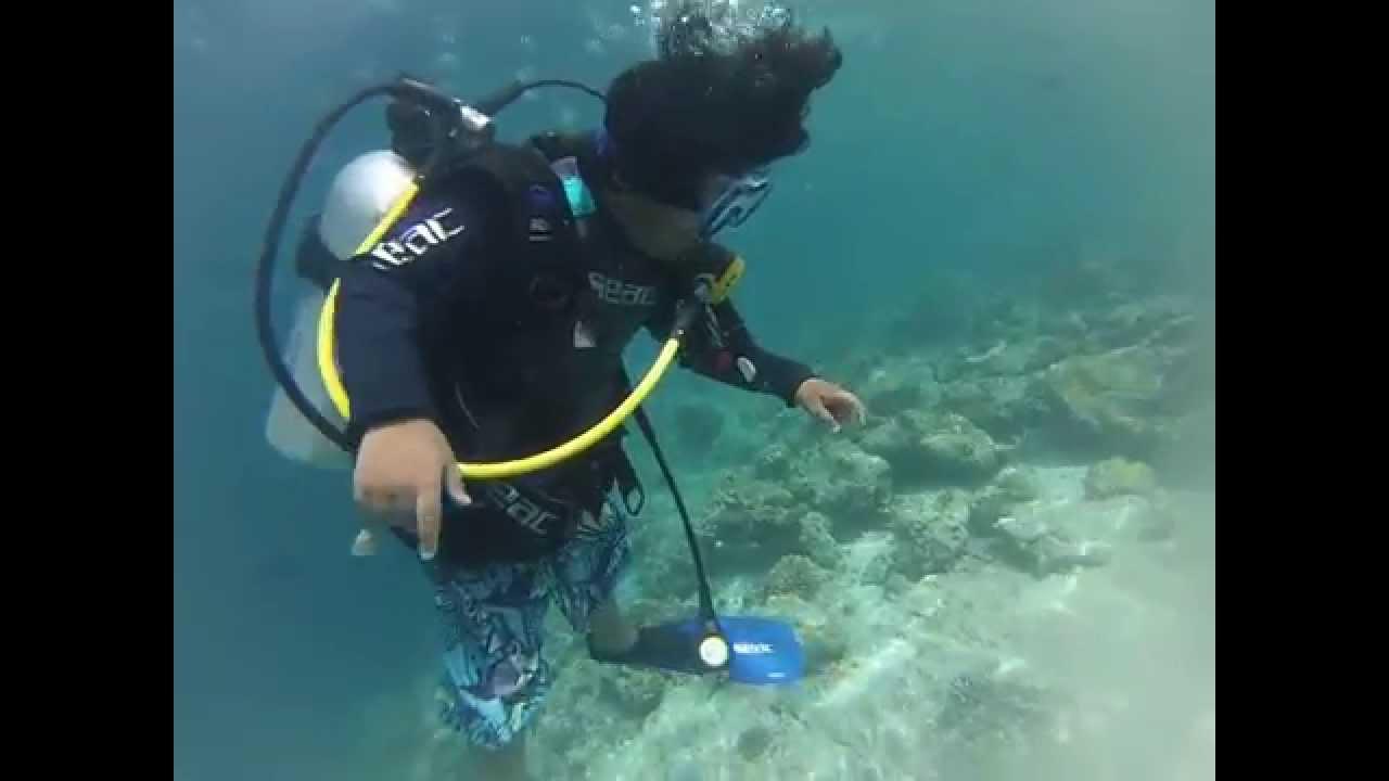 Maayafushi - Buceo en las Maldivas - Buceo en las Maldivas - Sumérgete las Maldivas