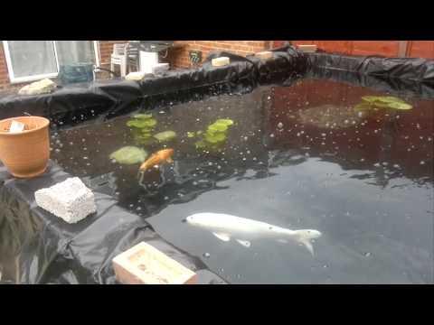 Koi pond filter upgrade to kaldnes k1 media static for Fish pond filtration setup