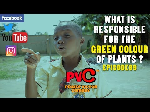 WHAT IS  RESPONSIBLE FOR THE GREEN COLOUR OF PLANTS  ( PRAIZE VICTOR COMEDY) EPISODE 89