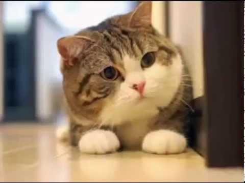 [แมวเหมียว] พากนรก 18+ # 2