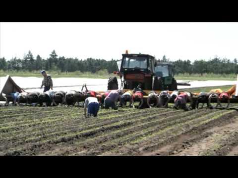 Økologiske produkter midtjylland sønder-felding danorganic a/s