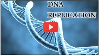 DNA Replication Animation - Super EASY
