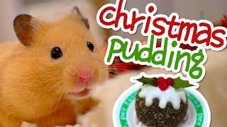 Christmas Pudding 🎄 HAMSTER KITCHEN