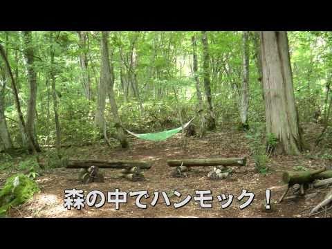 毛無山 森林セラピー「ゆりかごの小径」(新庄村)