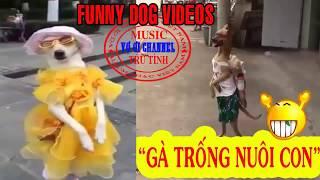 Bài Hát Gà trống nuôi con Chế (Vietnam Dog videos) | Nghịch cảnh xót xa Cha nghèo nuôi con bại não