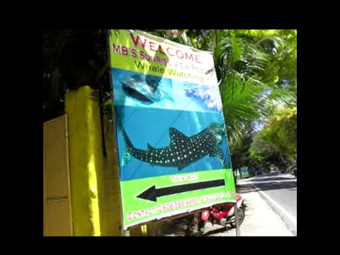 Arriving in Oslob Cebu and whale watching ~ My Motorcycle Adventures, Philippine Tourism