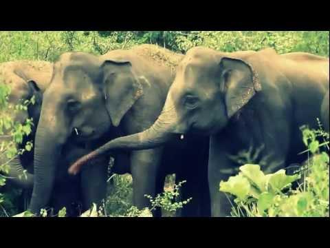 Habarana Eco Park - Elephant Safari - Sri Lanka
