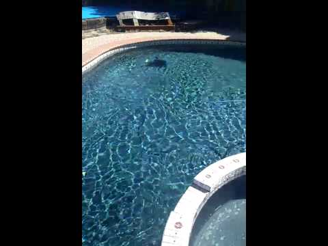 Dolphin Nautilus Robotic Pool Cleaner in action