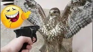 The most Animals funny videos By Zarif Adel 2018