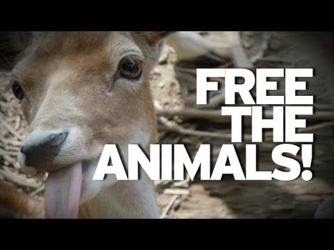 Man Breaks Zoo Animals Free! video