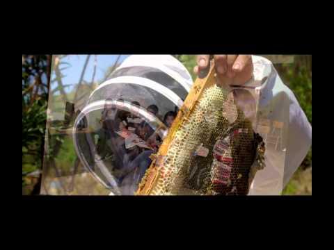 Trabajos Ong Plan Bee.mp4 video