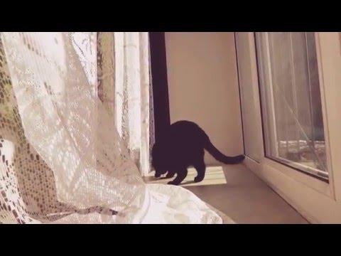 кот ловит муху видео