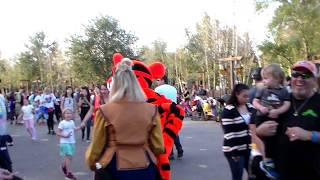 Winnie the Pooh | Tigger | Walt Disney World | wdw