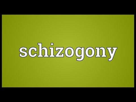 Header of schizogony
