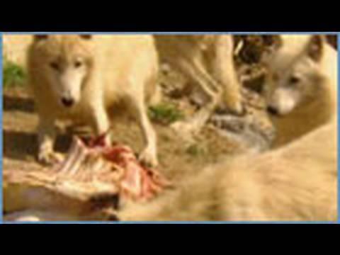 Part 2 Monster or Murderer - Animal X Natural Mystery Unit