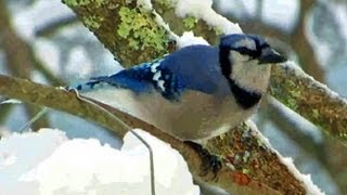Blue Jay, Code Blue - March 22, 2013