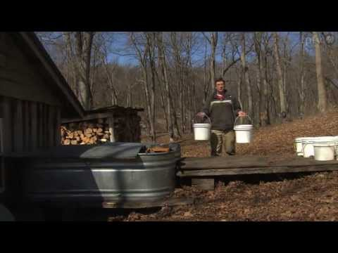maple syrup harvest algona iowa