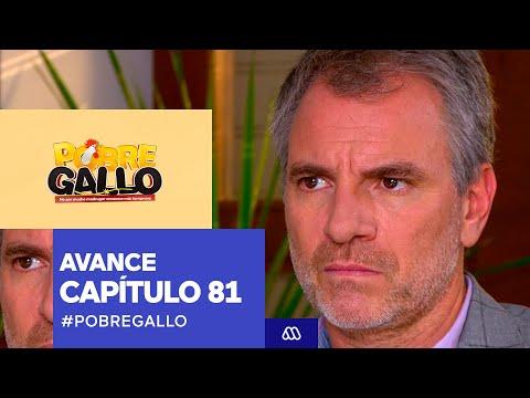 Pobre Gallo - Avance Capítulo 81