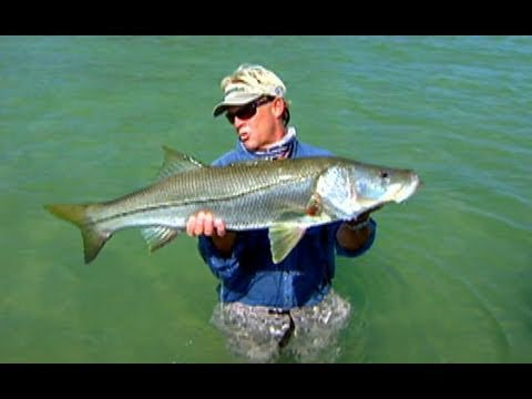 Addictive Fishing: Summer Stories - HOST jumps in water to land a big snook