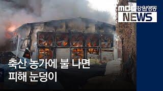 춘천](R)축산 농가 화재 취약, 원인과 예방법은?