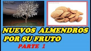 Como Reproducir Almendros Por Su Fruto 1ª PARTE // Almond Trees by Its Fruit Part 1